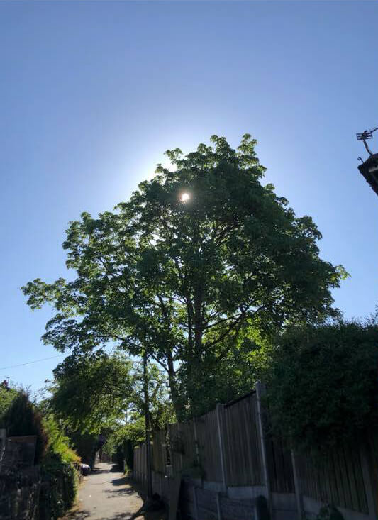 Affordable Tree Surgery